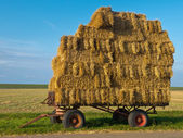 Trailer with Hay — Stock Photo