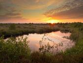 Swamp at dusk — Stockfoto