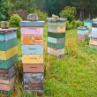 Group of Multicolored wooden Bee Hives — Stock fotografie