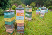 Group of Multicolored wooden Bee Hives — Stock Photo