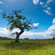 Tree in Countryside — Stock Photo