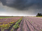 Harvested Field under Brooding Sky — Stock Photo
