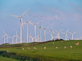 Wind Turbine and Birds — Stock Photo