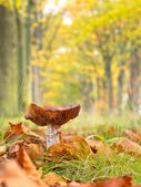 Mushroom growing in a Forest Lane with Shallow Depth of Field — Stock Photo