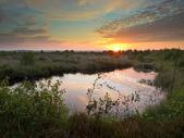 Swamp at dusk — Foto de Stock