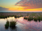 Swamp at dusk — Stock Photo