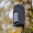 Ecological Gardening Batbox — Stock Photo