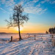 Lonely Tree in Winter Landscape — Stock Photo