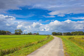 Dutch Road through Pastures — Stock Photo