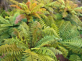 Group of tree ferns overview — Stock Photo