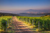 Chianti Vineyard Tuscany, Italy — Stock Photo