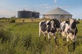 Biogas plant with Cows — Stock Photo