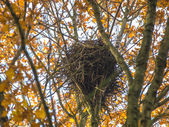 Crow Nest in the Top of a Tree in Autumn — Stock Photo