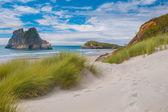 Dune vegetation at Famous Wharariki Beach, South Island, New Zea — Stock Photo