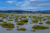 Mangroves in Hokianga Estuary — Stock Photo