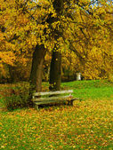Bench autumn — Stock Photo