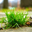 Grass on the pavement - Stock Photo