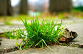 Grass on the pavement — Stock Photo