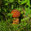 Cep on grass - Stock Photo