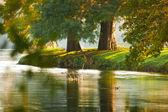 две осенние деревья у реки — Стоковое фото