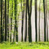 весенний лес — Стоковое фото