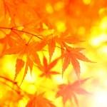 Fantasy autumn tree leaves — Stock Photo #51338281