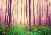 Fantasy forest trees background — Stock Photo