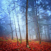 Fantasy autumn forest — Stock Photo