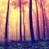 Frightening forest trees background — Stock Photo
