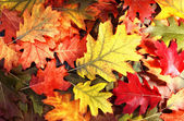 Tree autumn leaves — Stock Photo
