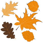 Autumn leaves isolated on white background — Stock Vector