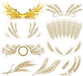 Buğday kulak koleksiyonu — Stok Vektör