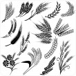 Stock Vector: Wheat ears collection