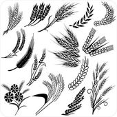 Wheat ears collection — Stock Vector
