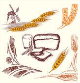 Wheat frame — Stock Vector