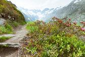 Hiking road in Goscheneralpsee, Switzerland — Stock Photo
