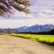 Beautiful view to Rigi mountains from forest pathway — Stock Photo