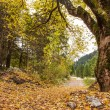 Path through Austrian Alpine Valley covered by leafs in autumn — Stock Photo