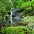 Stock Photo: Waterfall in subtropical rainforest, Kondalillnational park, Australia