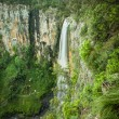 Twin Falls in Springbrook National Park, Gold Coast, Australia — Stock Photo