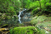 Waterfall in the subtropical rainforest, Kondalilla national park, Australia — Stock Photo