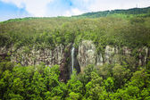 Waterfall in the subtropical rainforest, Springbrook national park, Australia — Stock Photo