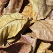 Fall Leaves — Stock fotografie