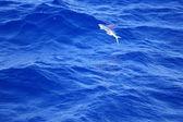 Flying fish — Stock Photo