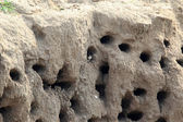 Sand martin's nesting hole (Riparia riparia) in North China — Stock Photo
