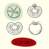 Vector illustration of tomato. — Vettoriale Stock