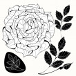 White and black roses. — Stock Vector #25897859