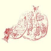 Vector illustration of pomegranate — Stock Vector