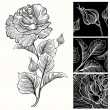 White and black roses. — Stock Vector