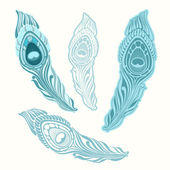 Stylized peacock feather.Vector set. — Stockvector